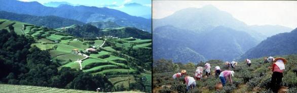 Lishan Mountain