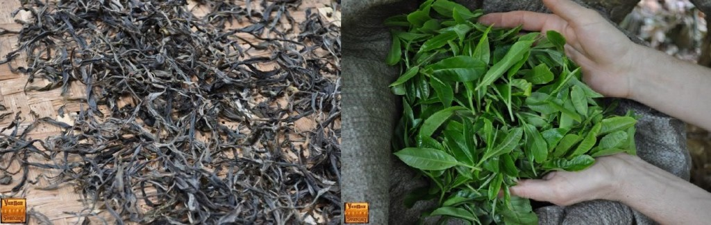 Mao Cha and Raw Leaves